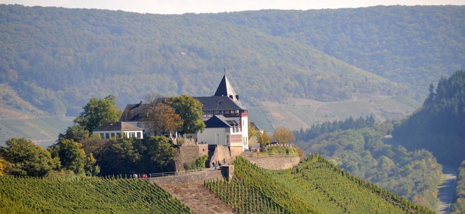 Marienburg, Petersberg, Burg, Mosel, Moseltal, Weinstöcke, Zell